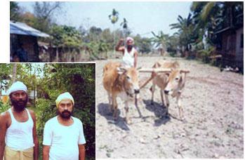 Asomiya Sikh farmer of Assam