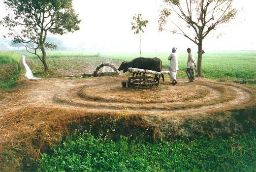 Punjab Cries for a New Perspective on the Environment by Pashaura Singh Dhillon