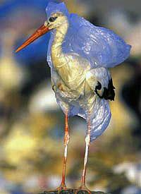 Bird caught in a plastic bag