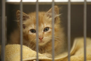 Kitten in shelter